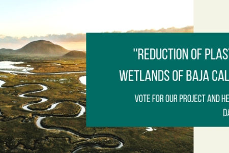 Reduction of plastic pollution in the wetlands of Baja California, Mexico